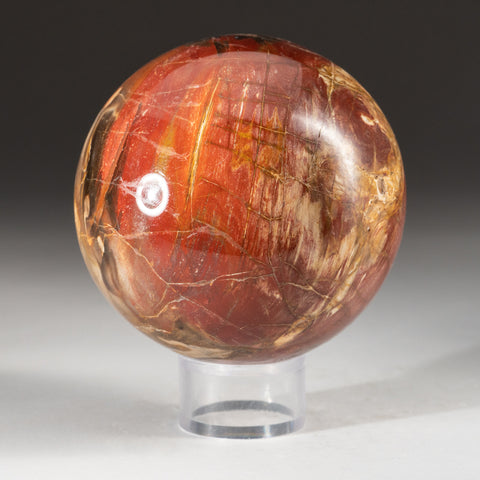"Polished Petrified Wood Sphere from Madagascar (3.5"", 3.6 lbs)"