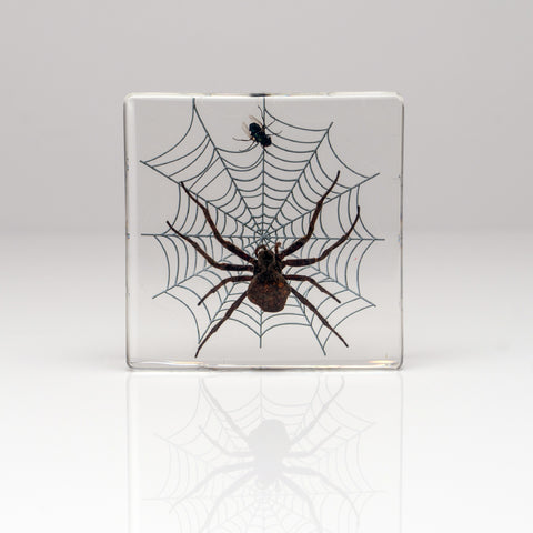 Orb Weaver Spider & Fly in Lucite