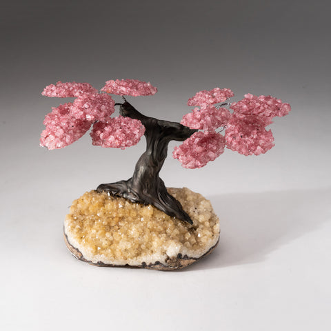 Genuine Custom Rose Quartz Clustered Gemstone Tree on Citrine Matrix (The Comfort Tree)