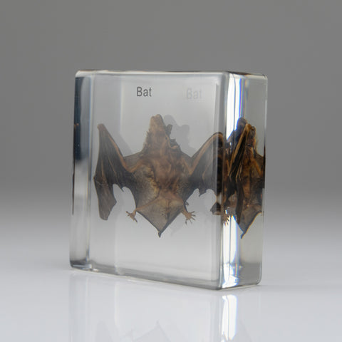 Small Brown Bat in lucite