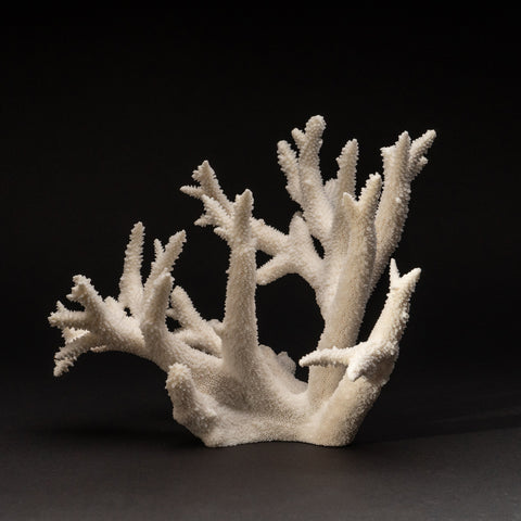 Natural Branch Coral (2 lbs)