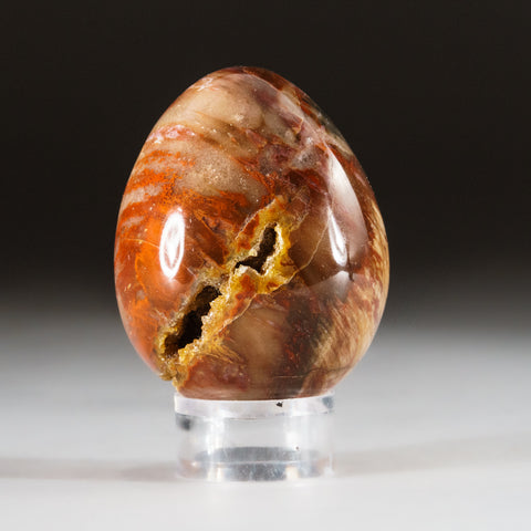 Polished Petrified Wood Egg from Madagascar (137 grams)