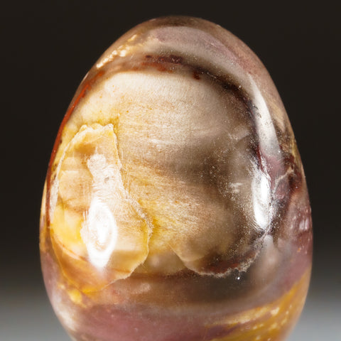 Polished Petrified Wood Egg from Madagascar (147 grams)