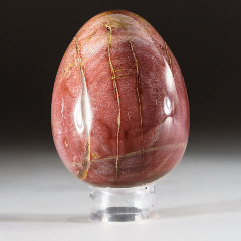 Polished Petrified Wood Egg from Madagascar (266 grams)