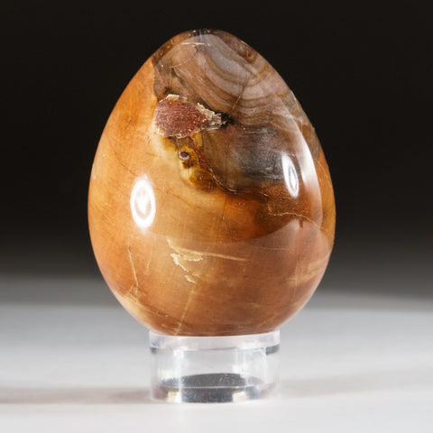 Polished Petrified Wood Egg from Madagascar (181 grams)