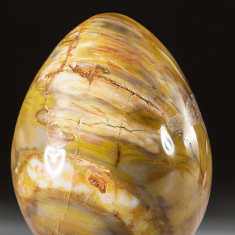 Polished Petrified Wood Egg from Madagascar (204.6 grams)