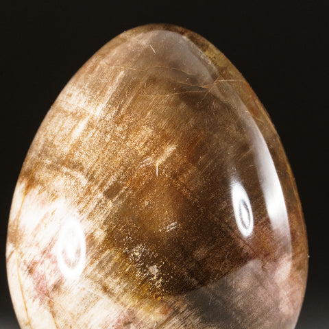 Polished Petrified Wood Egg from Madagascar (236 grams)