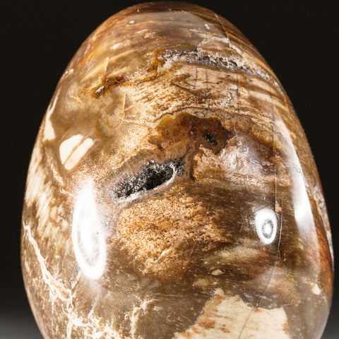 Polished Petrified Wood Egg from Madagascar (242 grams)