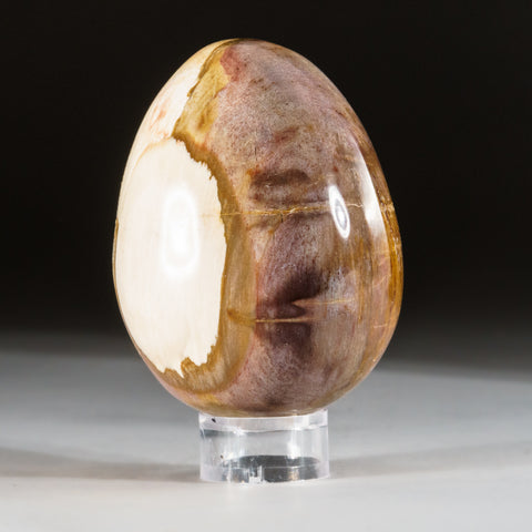 Polished Petrified Wood Egg from Madagascar (.6 lbs)