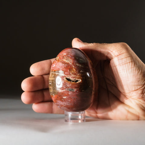 Polished Petrified Wood Egg from Madagascar (.8 lbs)