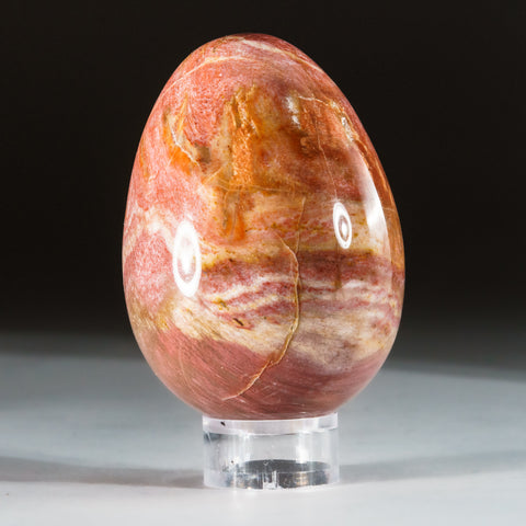 Polished Petrified Wood Egg from Madagascar (.5 lbs)