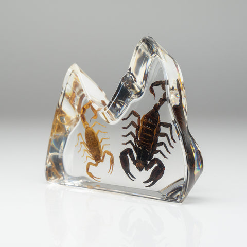 Two Scorpion in Freeform Lucite