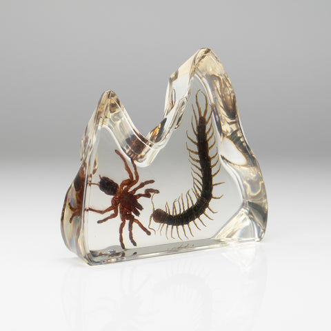 Baby Tarantula and Centipede in lucite