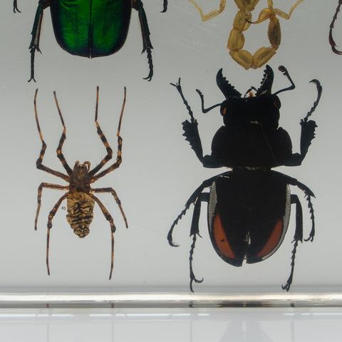 12 Assorted Bugs Collection in Lucite