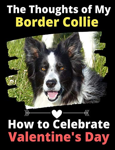 The Thoughts of My Border Collie: How to Celebrate Valentine's Day
