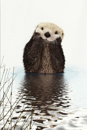 Otter Notebook
