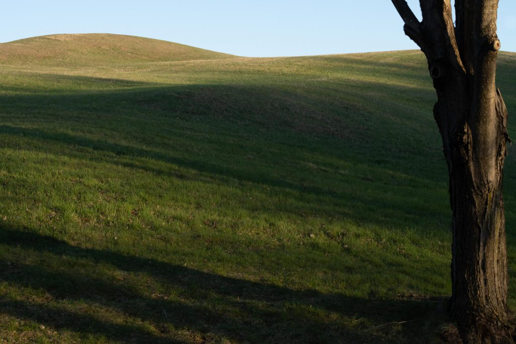 Spring field of rolling hills with sunshine spilling over the crest of the highest knoll, blue skies, a half lit tree in the foreground