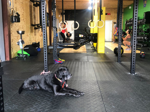 "SoWal CrossFit®'s very own Coach Victoria ""V"" Naughton's dog Wander working hard in our gym."