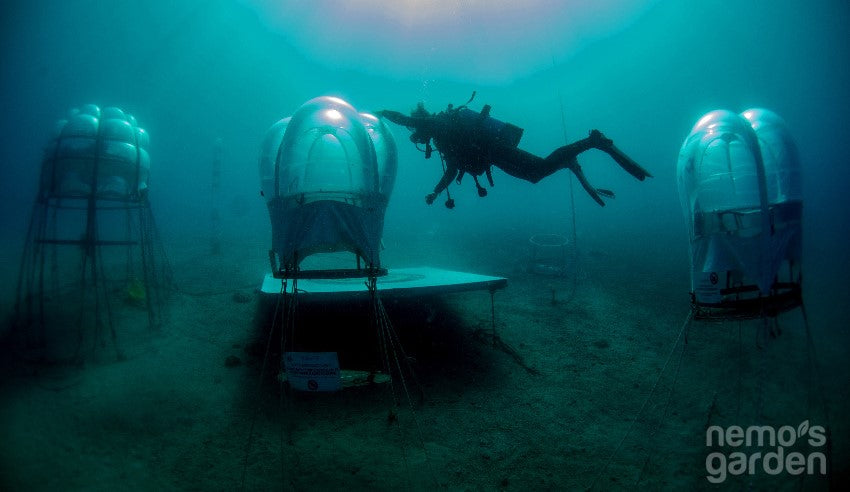 Underwater Agriculture: a Plaything or a Solution to Future Food Security?