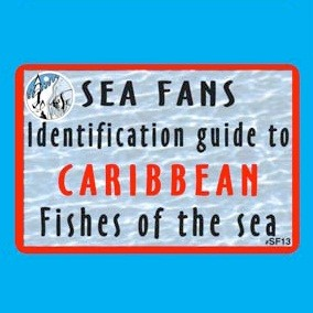 Trident Caribbean Fish Fans Education - DIPNDIVE