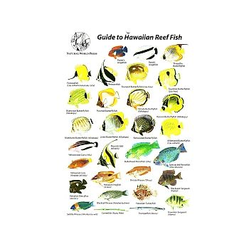 Trident Mini Fish ID Card Hawaii - DIPNDIVE