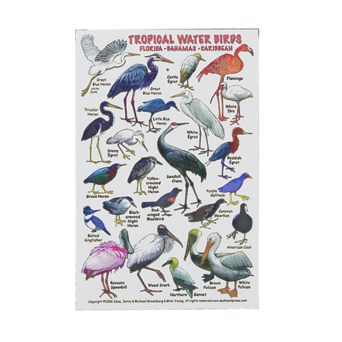 Innovative Tropical Water Birds of Florida Caribbean ID Card - DIPNDIVE