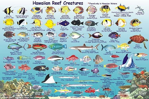 Trident Franko Molokai Reef Creatures Guide and I.D.Card - DIPNDIVE