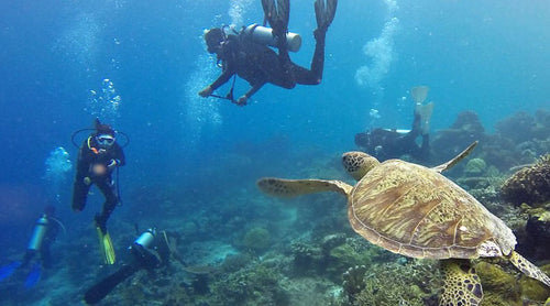 sustainable turtle diving