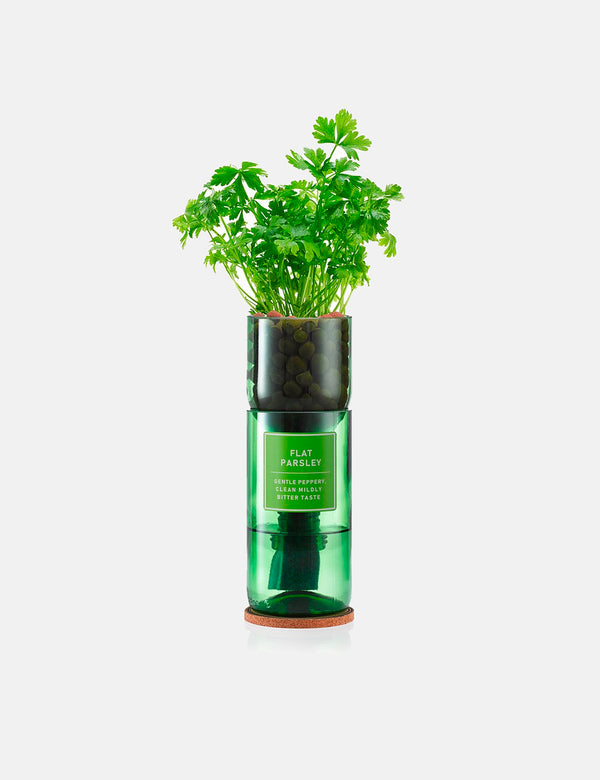 Hydro Herb Flat Parsley Single Unit