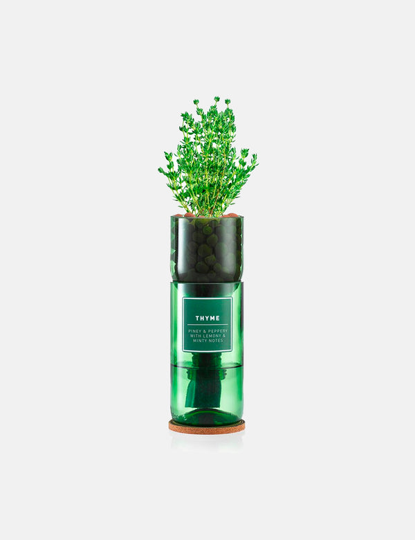 Hydro Herb Thyme Single Unit
