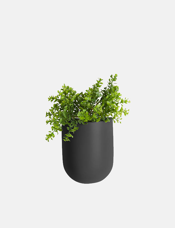 Present Time Oval Wall Plant Pot - Black