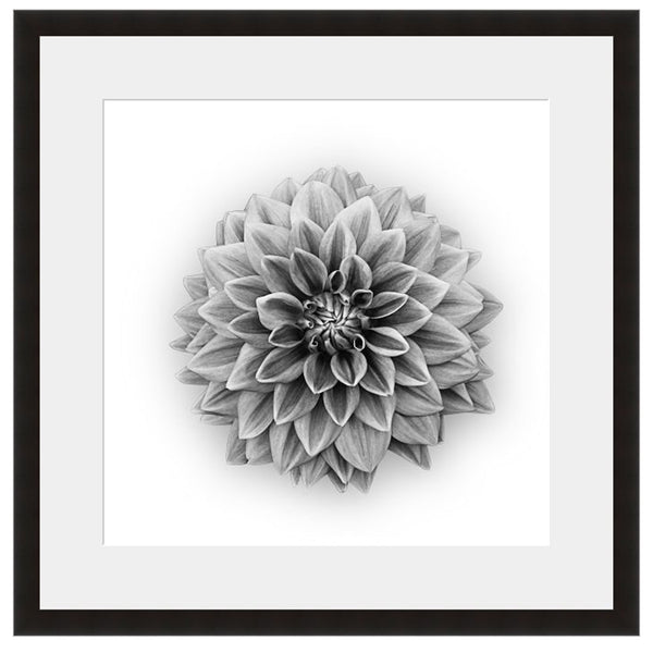 Dahlia  - Fine Art Photograph by Beth Forester  - Framed Wall Art