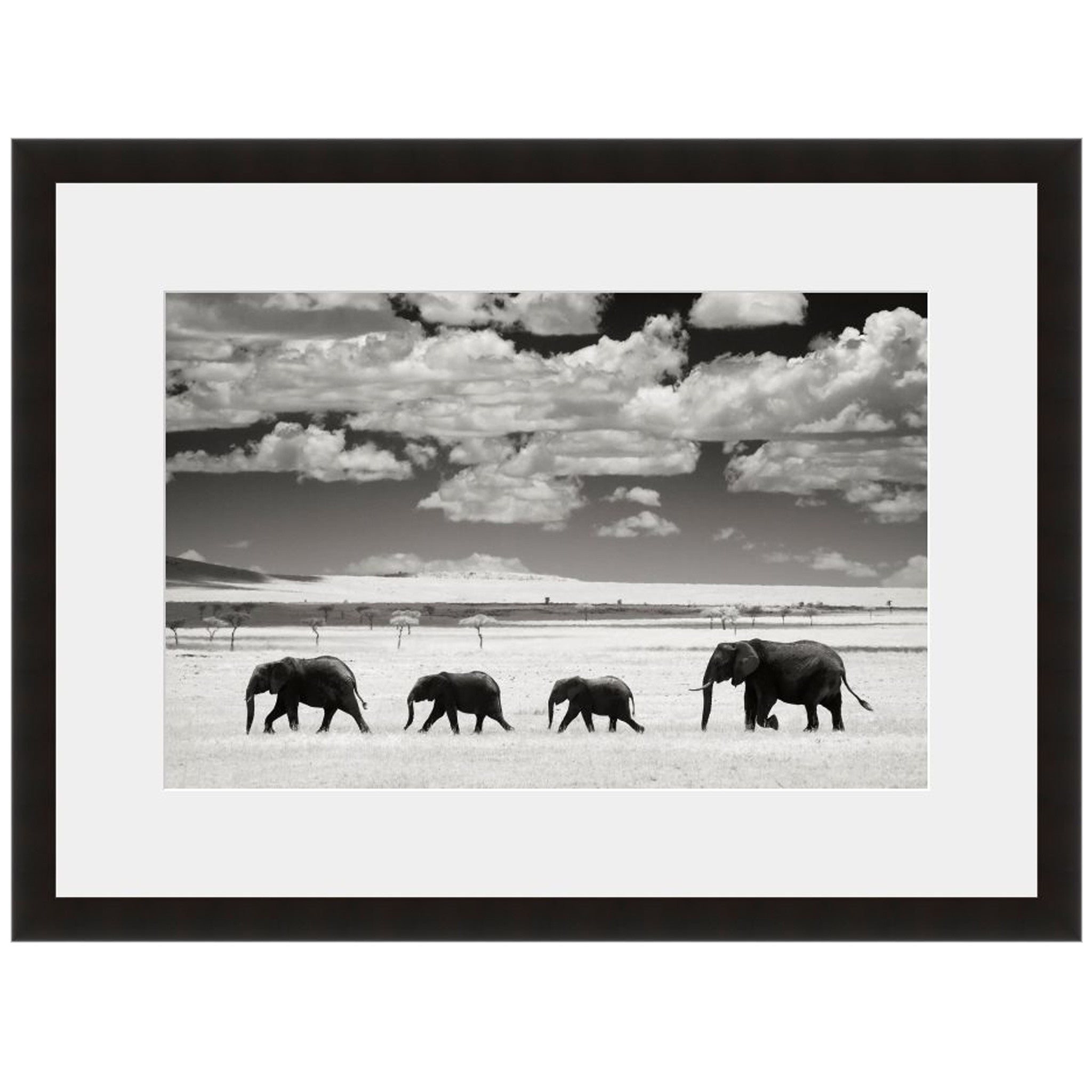 Elephant Chain - Fine Art Photograph by Andy Biggs - Framed Wall Art ...