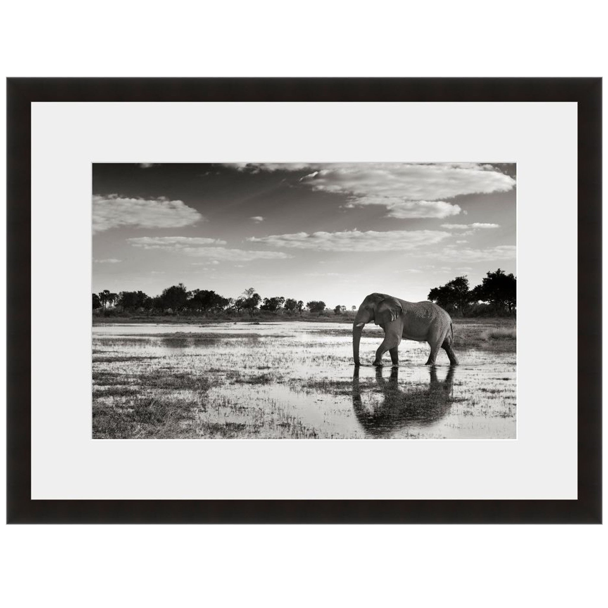 Elephant Reflection - Fine Art Photograph by Andy Biggs - Framed ...