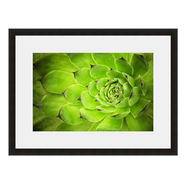 Succulent Green Cactus  - Fine Art Photograph by Beth Forester  - Framed Wall Art