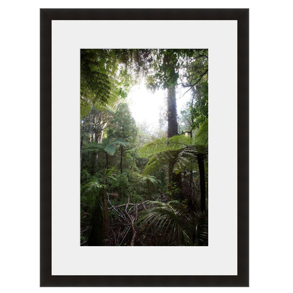 Light in the Woods  - Fine Art Photograph by Andy Katz  - Framed Wall Art