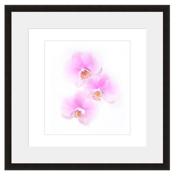 Orchid Trio  - Fine Art Photograph by Beth Forester  - Framed Wall Art