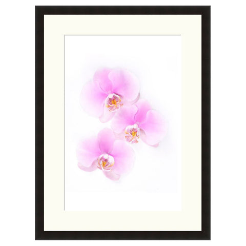 Orchids  - Fine Art Photograph by Beth Forester  - Framed Wall Art