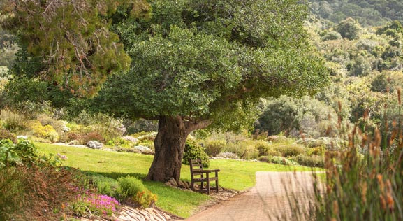 4 Ways to Love Trees (No Hugging Necessary)