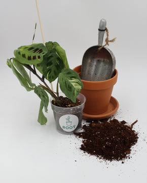 Houseplant 101 and potting class