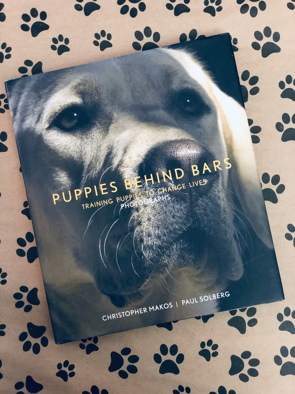 Puppies Behind Bars by Christopher/ Paul Solberg