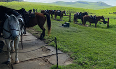 Ranch horses waiting for their ride