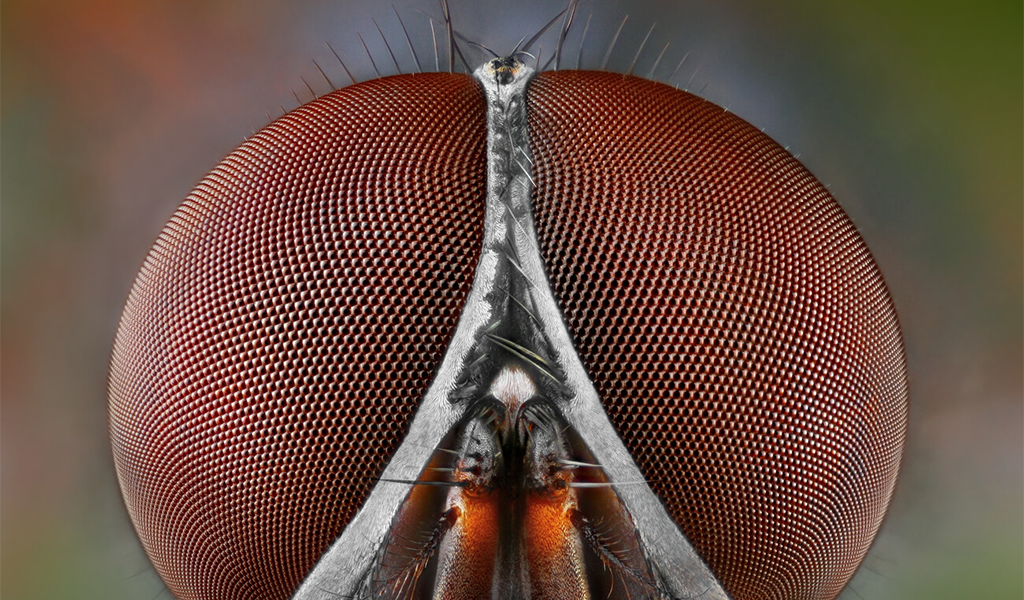 Projection system to study insect vision could lead to new navigational aids