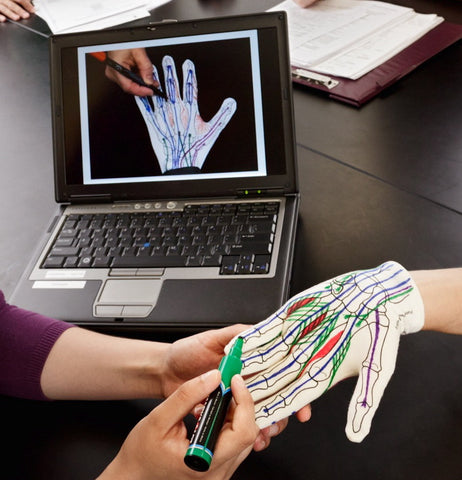 Anatomy Glove Learning System - English Videos