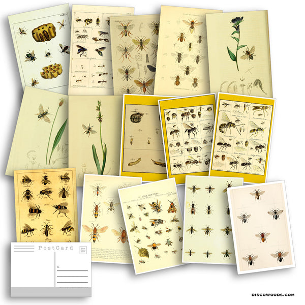 Bees Postcard Set - Set of 27 Postcards - Vintage - Nature - Scrapbooking Post Cards - Honey Bees - Natural Wonders