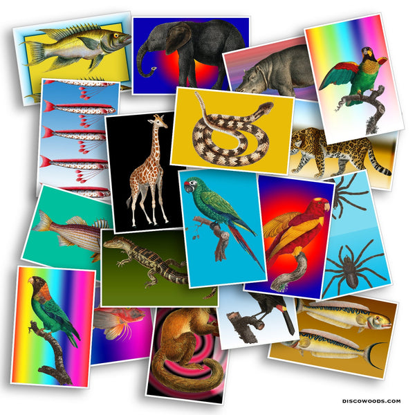 Jungle Animals Postcard Set - Set of 20 Postcards - Safari - Travel - Scrapbooking Post Cards - Adventure - Snakes - Fish - Birds - Exotic