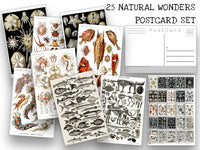 Natural Wonders Postcard Set - Set of 25 Postcards - Vintage - Nature - Scrapbooking Post Cards