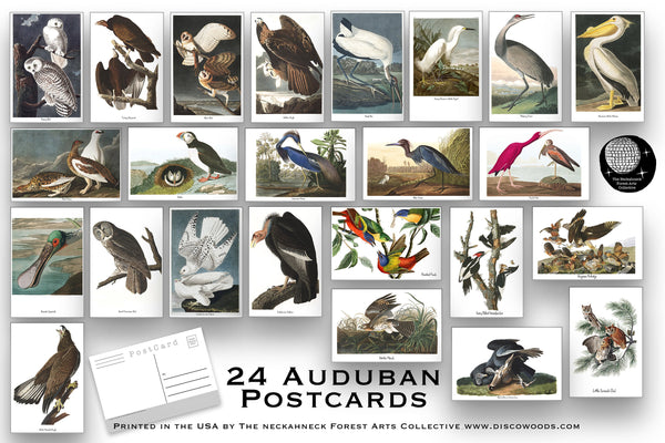 Audubon Postcard Set 24 Post Cards - Bird Watching - Outdoors - Nature - collage - Wall Art - Scrapbook