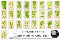 Vintage Ferns Postcard Set - Set of 25 Postcards - Vintage - Nature - Scrapbooking Post Cards - Fern Drawings - Natural Wonders - botanical