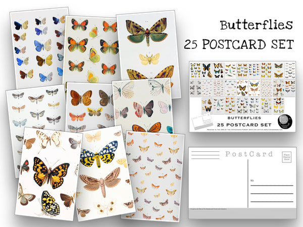 Butterfly Postcard Set - Set of 25 Postcards - Vintage butterfly Illustrations - Nature - Scrapbooking Post Cards - Natural Wonders